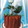 کیک گلدانی