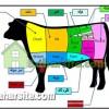 قسمت های مختلف گوشت